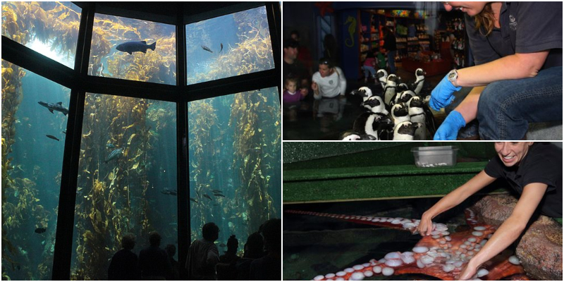 This image has an empty alt attribute; its file name is Monterey-Bay-Aquarium1.jpg